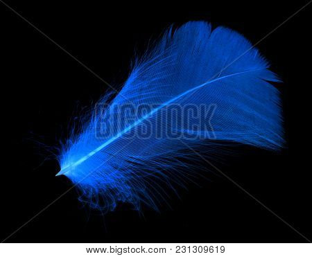 Blue Feather On A Black Background In Inversion