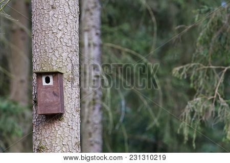Bird Booth Hung On A Tree. Spring Home For Birds