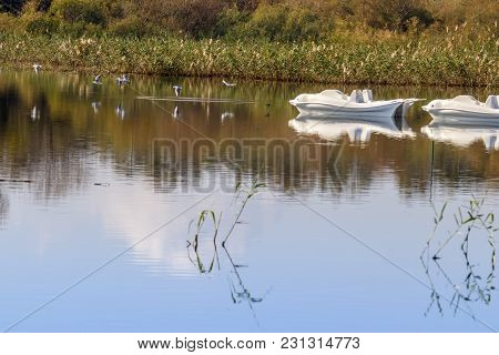 Reflection In The Water Of A Pond Of Reeds, White Catamarans And Flying Birds