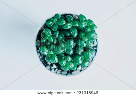 Top View. Ornamental Background Plant In Pot On Wooden Table With Copy Space. Image For Isolated, Na