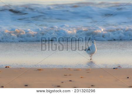 Winter Nature On The Coast. Beautiful White Gull Standing On The Shore. Serene Image Of A Solitary S