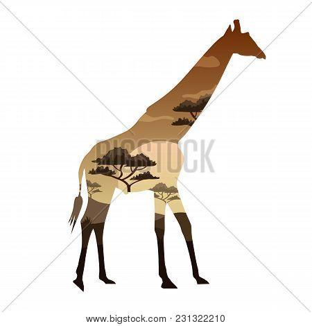 Vector Illustration Double Exposure. Girafe Wildlife Concept