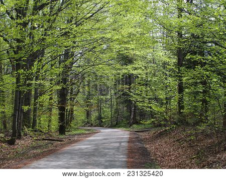 Desolate Road In Forest With Colorful Trees In Beskid Mountains Landscapes At Wapienica Near Bielsko