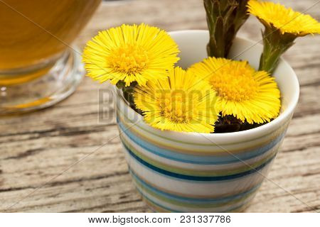 Fresh Coltsfoot (tussilago Farfara) Flowers In A Striped Cup