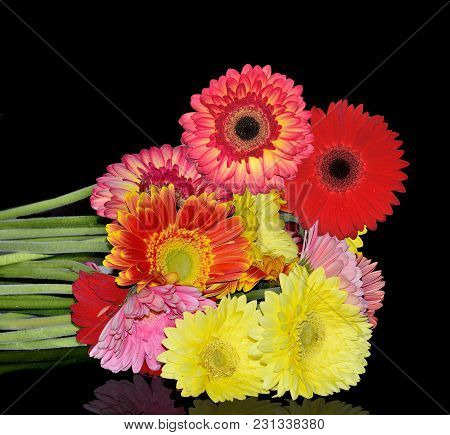 Beautiful Bouquet Of Different Colorful Gerberas Close Up On A Black Background Isolated With Reflec