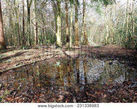 Woodland Pond, Philipshill Wood, Chorleywood, Hertfordshire, Uk