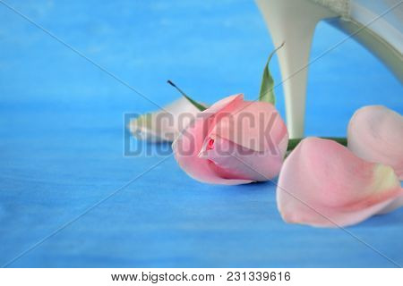 Pink Rose, Petals And White High Heel Shoe On Blue Background
