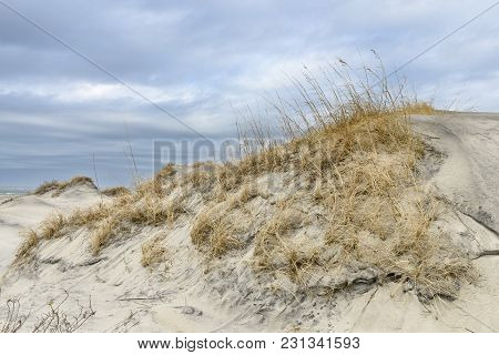 Sand Dunes with Sea Oats  in Winter on Cloudy Day