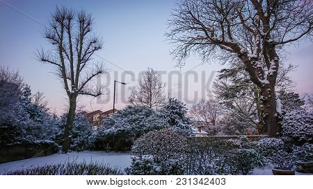 Snow Covering Trees In The Morning In London Suburb After The Beast From The East Storm Emma Brought