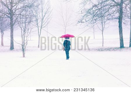 Woman Walking Through Snow With Umbrella, Parco Di Monza, Italy