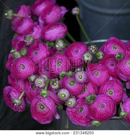 Pink Lupin For Sale. Persian Buttercup Flowers Ranunculus - Wedding Arrangement