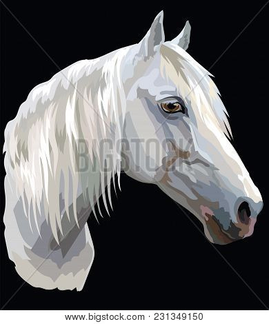 Colored Portrait Of White Orlov Trotter Horse. Horse Head With Long Mane In Profile Isolated Vector