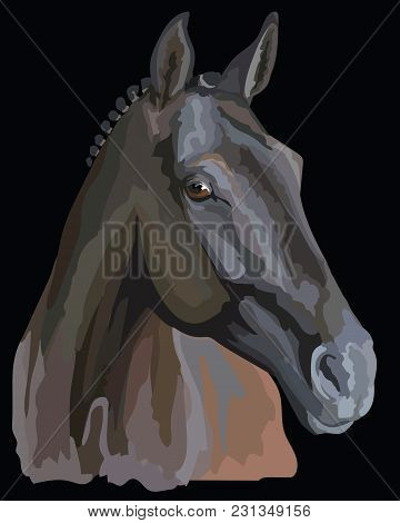 Colored Portrait Of Trakehner Horse. Horse Head In Profile Isolated Vector Illustration On Black Bac