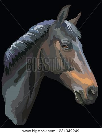 Colored Portrait Of  Black Trakehner Horse. Horse Head In Profile Isolated Vector Illustration On Bl