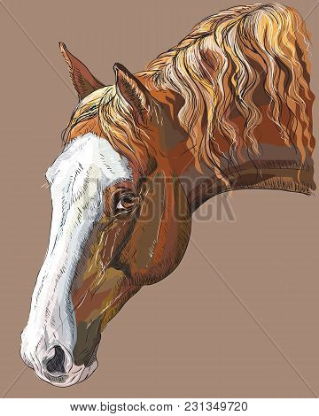 Colorful Portrait Of Dark Palomino Horse. Horse Head With Long Mane In Profile Isolated Vector Hand