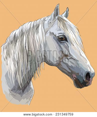 Colorful Portrait Of White Orlov Trotter Horse. Horse Head With Long Mane In Profile Isolated Vector