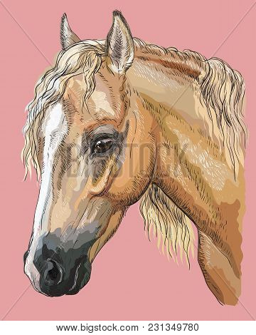 Colorful Portrait Of Palomino Welsh Pony. Horse Head With Long Mane In Profile Isolated Vector Hand