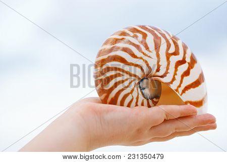 nautilus sea shell on hand  with sunrise light, shallow dof