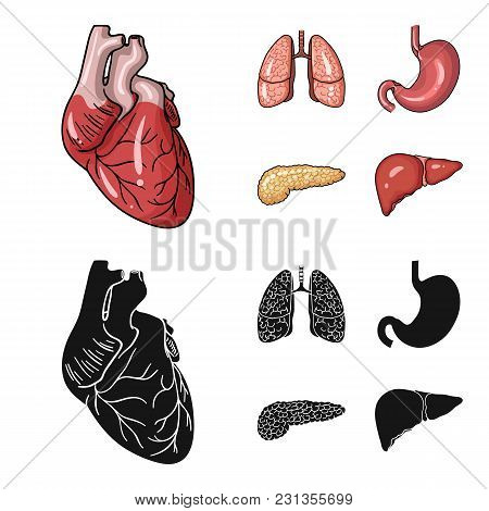 Heart, Lungs, Stomach, Pancreas. Human Organs Set Collection Icons In Cartoon, Black Style Vector Sy
