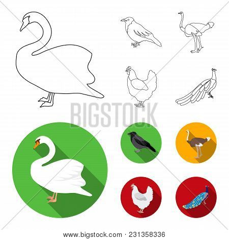Crow, Ostrich, Chicken, Peacock. Birds Set Collection Icons In Outline, Flat Style Vector Symbol Sto