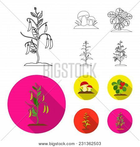 Mushrooms, Strawberries, Corn, Cucumber.plant Set Collection Icons In Outline, Flat Style Vector Sym
