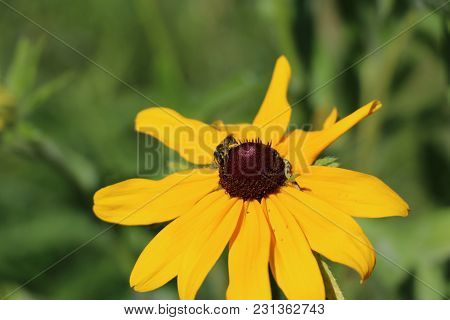 A Bee Collecting Her Nectar And Pollen