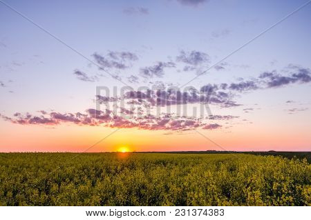 A Beautiful Sunset In Summer Over A Field With Rapeseed In The Countryside