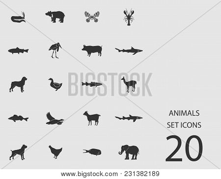 Animals Set Of Flat Icons. Simple Vector Illustration