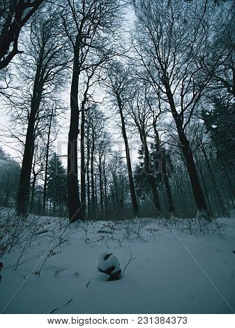 Dark Winter Forest On Hill. Tree At The Mountain Peak, Ground Covered With Fresh Powder Snow