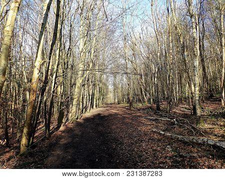 Woodland Scenes, Philipshill Wood, Chorleywood, Hertfordshire, Uk