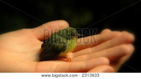Vogel In der Hand (Farbe)