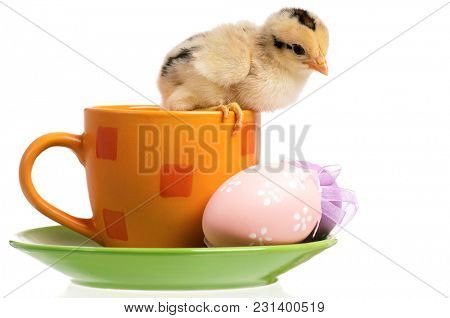 One little chicken on cup with Easter eggs, isolated on white background