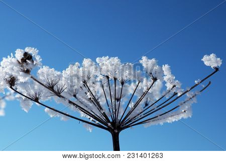 Crystal Snow-flowers Against The Blue Sky. Winter Wonder Of Nature Crystals Of Frost.
