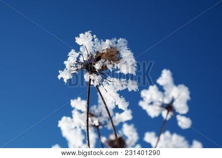 The Crystallized Pieces Of Ice Flowers On A Background Of Blue Sky. Winter Wonder Of Nature Crystals