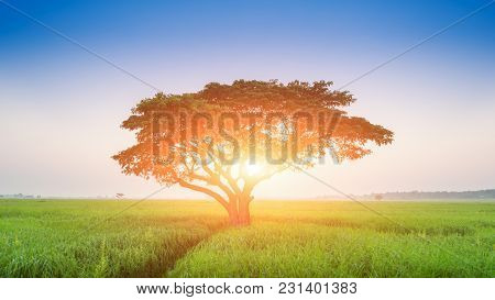 Lonely Green Oak Tree In The Field, Lonely Tree Against A Blue Sky At Sunset, Summer Landscape With