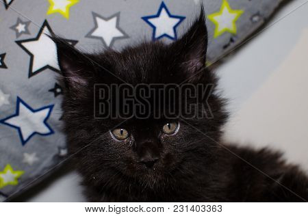 Small Black Kitten Playing With A Toy.