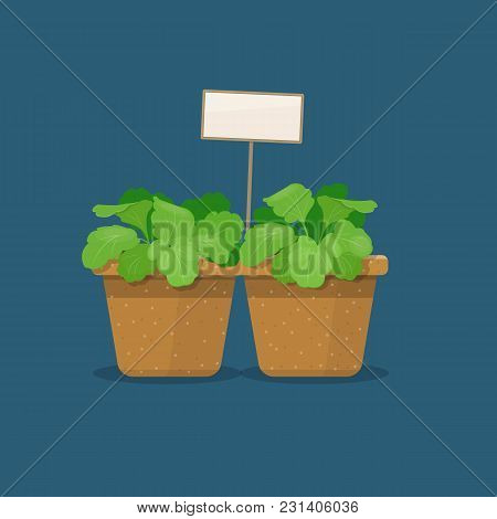 Young Plants In Biodegradable Peat Pots With Label On A Blue Background