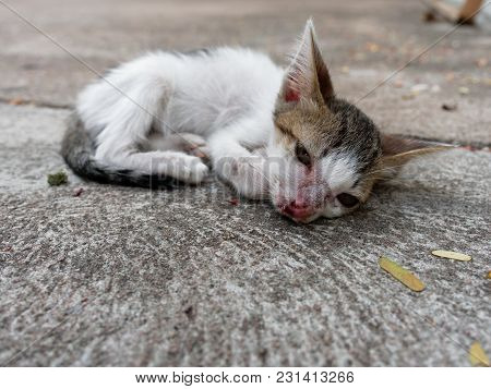 White And Brown Stray Kitten Or Cat With Open Eyes And Scar On Nose Over Cement Background Which Loo