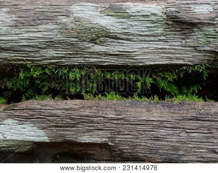 Small Fern Growing Inside The Crack Of Log Bench In The Park Show Details Of Exterior, Used As Backg