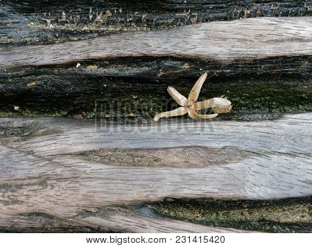 Dry Star Shaped Leaf Or Flower Fall Inside The Crack Of Log Bench In The Park Show Details Of Exteri