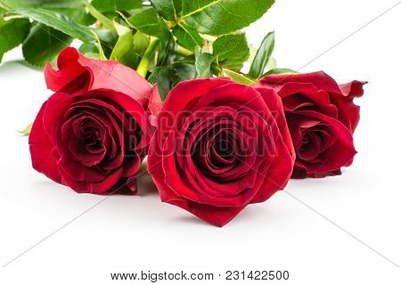 Three Red Roses Isolated On White Background Bunch Of Fresh Cut