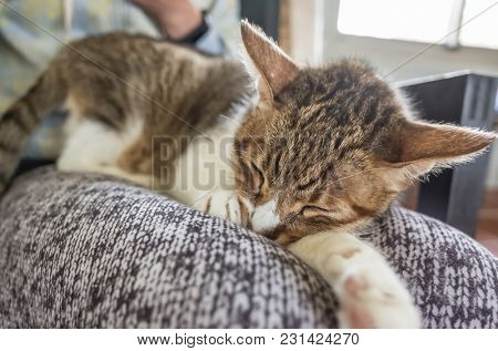 cat sleep on a woman's thigh at home