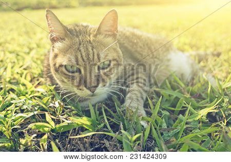 old cat sit in the grassland