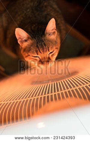 tabby cat using heating radiator at home