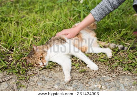 woman touch a cat in the outdoor