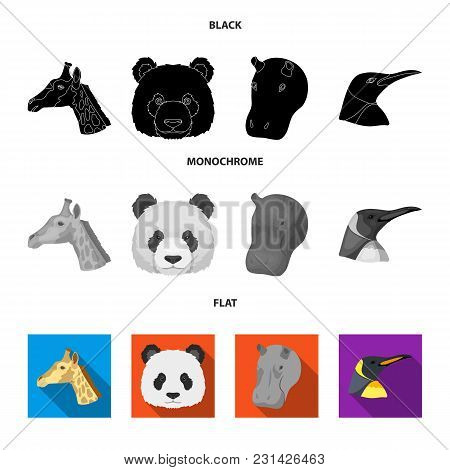 Panda, Giraffe, Hippopotamus, Penguin, Realistic Animals Set Collection Icons In Black, Flat, Monoch