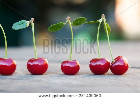 Red Cherries Berry With Green Leaves. Ripe Fruit Macro View Photo. Selective Focus, Shallow Depth Of