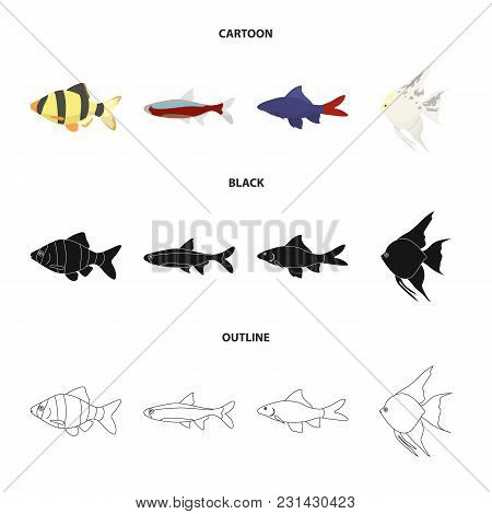 Angelfish, Common, Barbus, Neon.fish Set Collection Icons In Cartoon, Black, Outline Style Vector Sy