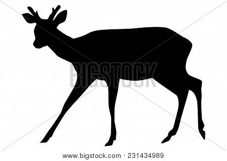 Sika Deer With Horns. Black Silhouette. Vector Illustration Isolated On White Background