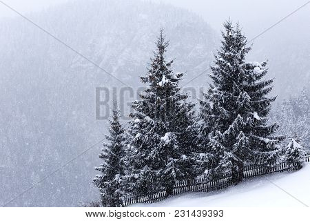 Trees Covered With Hoarfrost And Snow In Carpathians Mountain - Romania